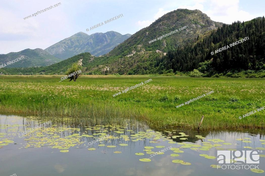 Stock Photo: Montenegro - Skadarsko Jezero (Lago Scutari) - L'area palustre di Virpazar.