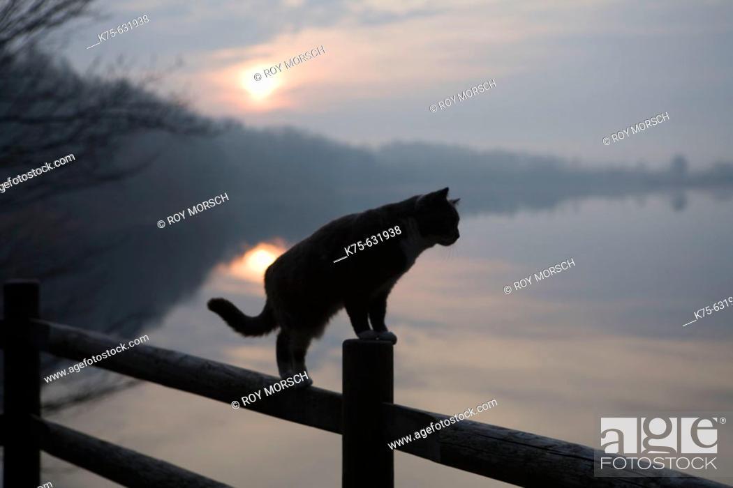 Stock Photo: Cat on rail.