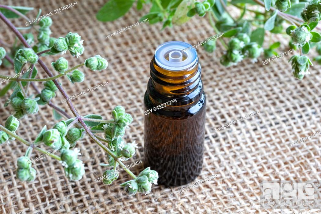 Stock Photo: A bottle of essential oil with fresh blooming marjoram twigs in the background.