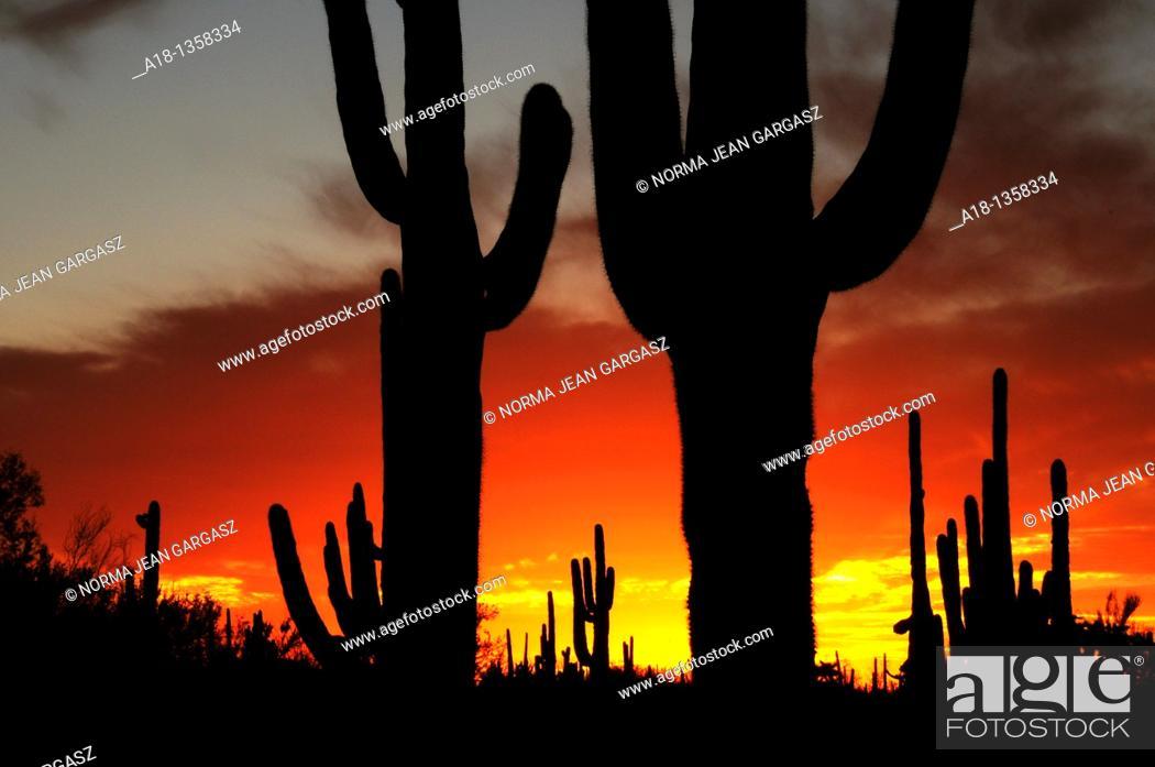 Stock Photo: Ironwood Forest National Monument at sunset near Marana, Arizona, USA, in the Sonoran Desert.