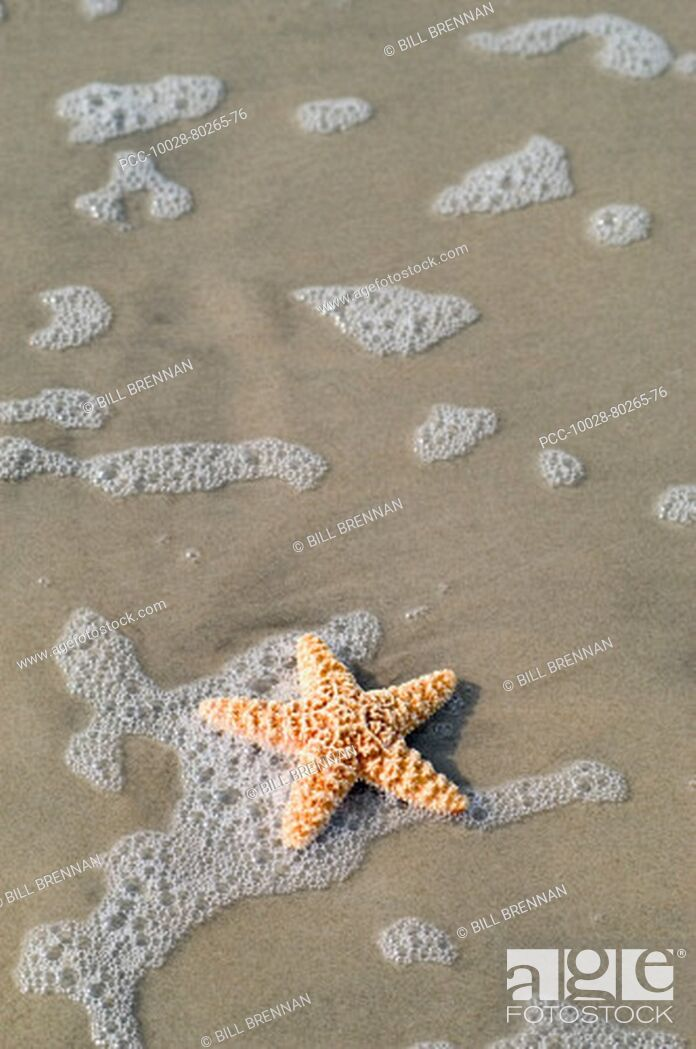Stock Photo: Starfish on sandy beach with ocean wash and seafoam.