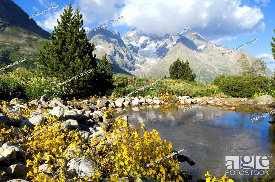 Stock Photo: France, Hautes Alpes, Lautaret Alpine Botanical Garden, Meije Massif in the background.