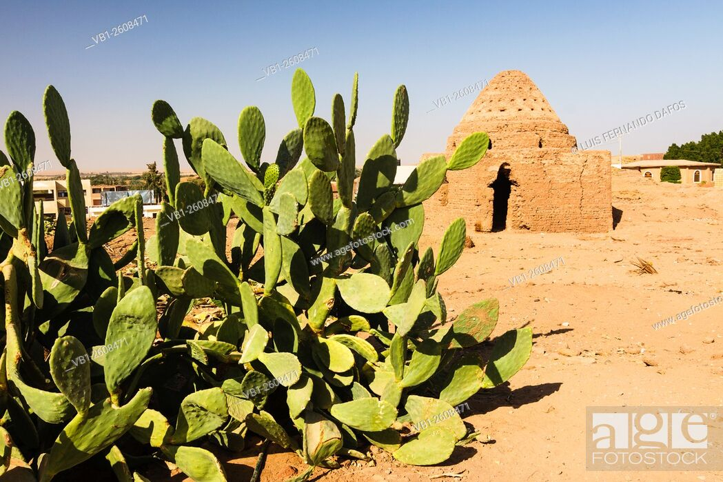 Imagen: Mut old town, Dakhla Oasis, Egypt.
