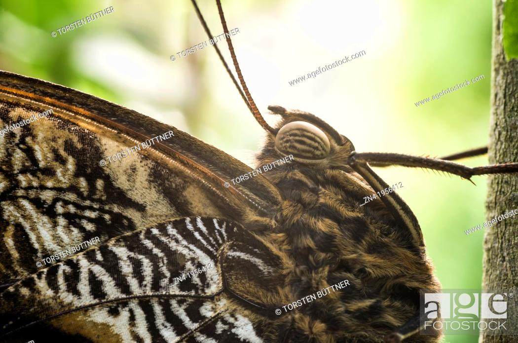 Stock Photo: Butterfly Detail of Thorax and Compound Eye in Botanical Garden Erfurt. Germany.