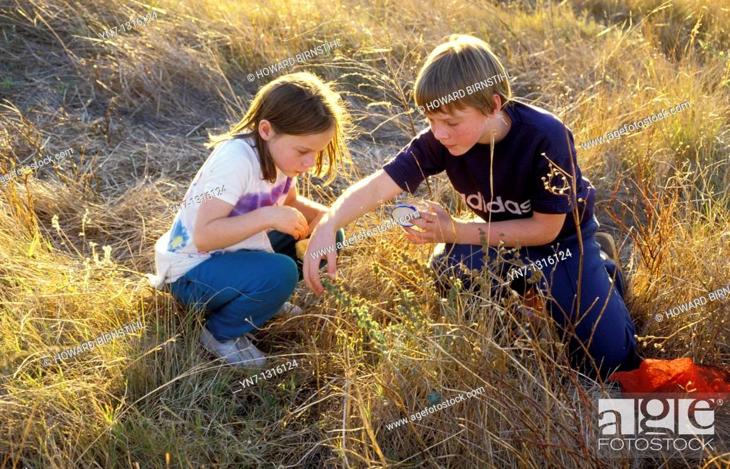 Stock Photo: two children in long dry grass collecting grasshoppers.