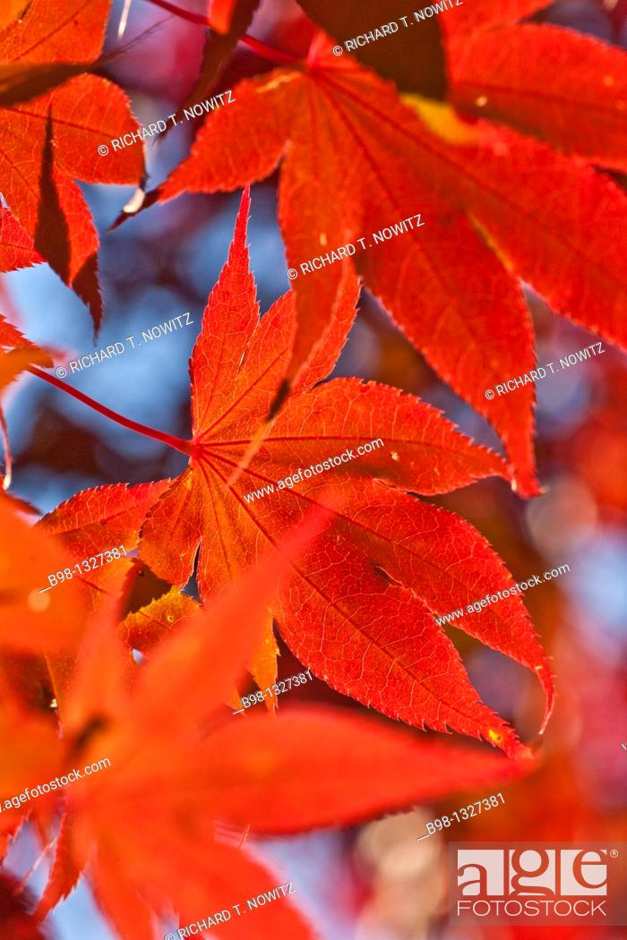 Stock Photo: Fall colors in Tilden Woods Park, Montgomery County, Maryland.