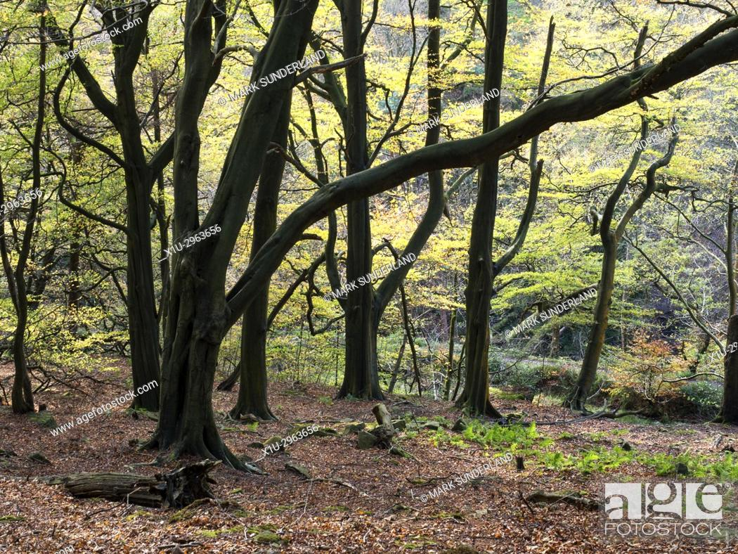 Stock Photo: Autumn Trees in Middle Dean Woods near Pecket Well Hebden Bridge West Yorkshire England.