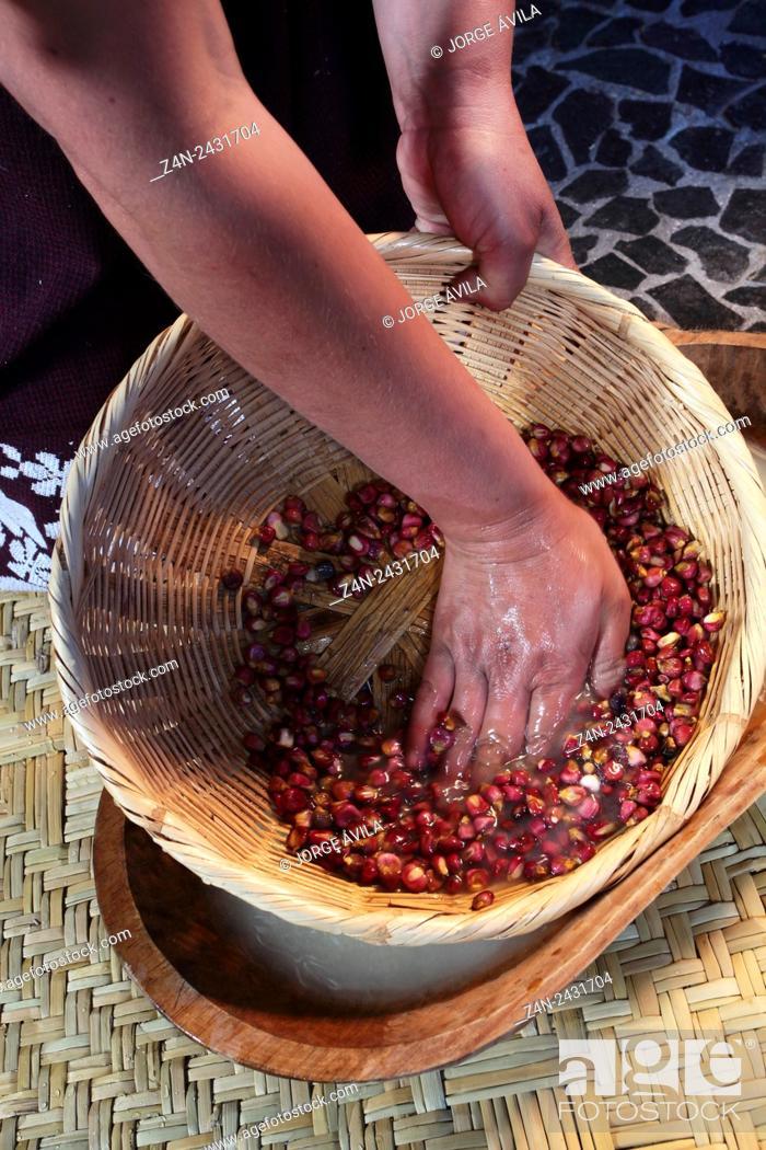 Imagen: Mexican food, Corn.