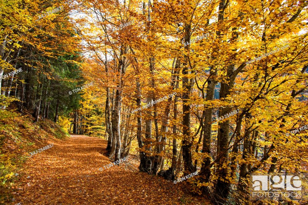 Stock Photo: Trees during autumn in the French Alps.