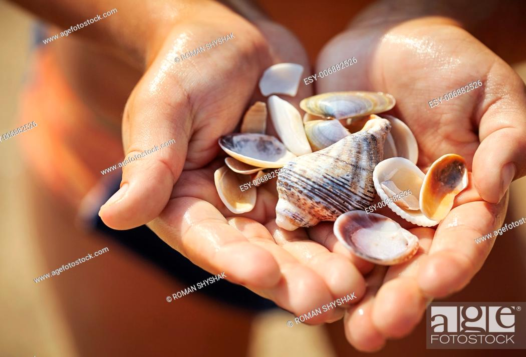 Stock Photo: shells in the hand of a child.