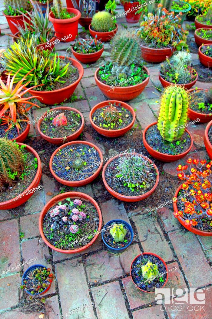 Stock Photo: cactus pots on the roof, Blanes, Catalonia, Spain.
