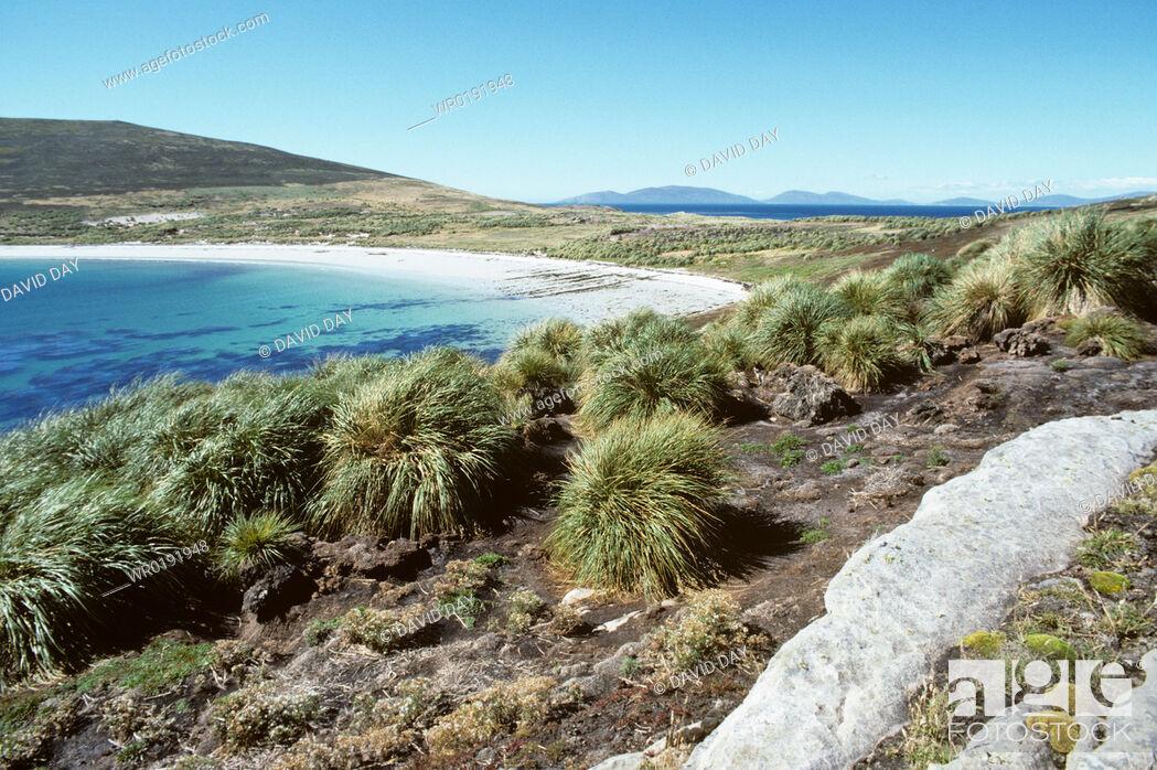 Imagen: Landing beach and penguin nesting area Carcass Island Carcass Island, Falkland Islands.