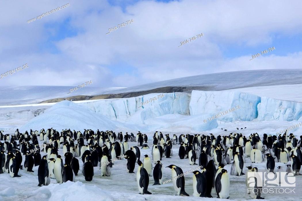 Stock Photo: Colony of Emperor penguins Aptenodytes forsteri, Snow Hill Island, Weddell Sea, Antarctica, Polar Regions.