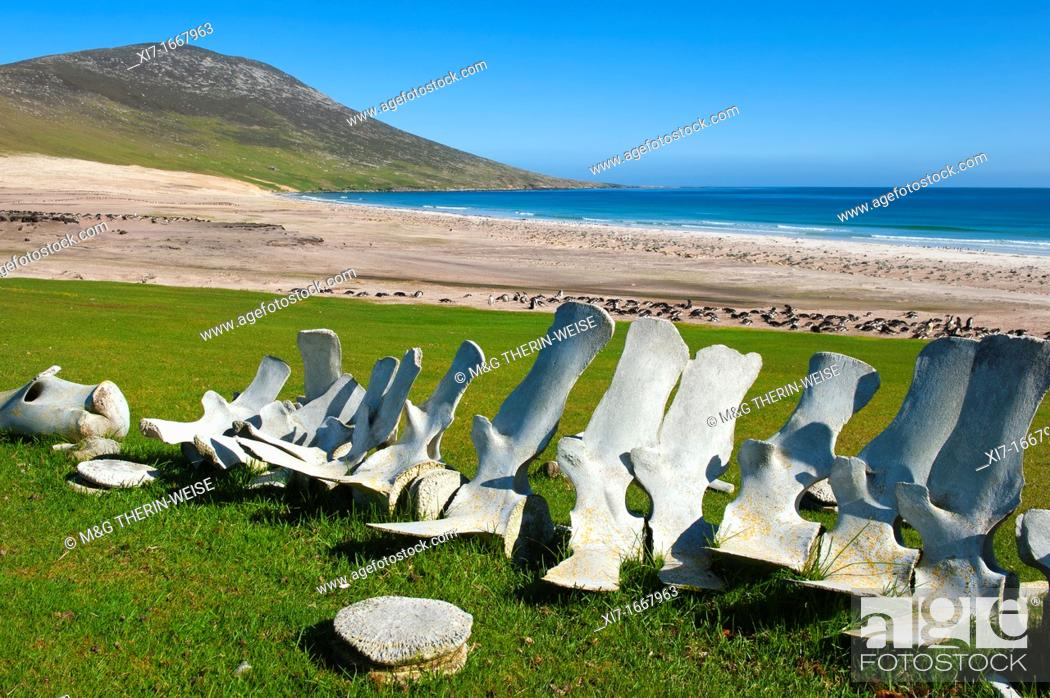 Imagen: Whale skeletons on the beach of Saunders Island, Falkland Malvinas Islands.