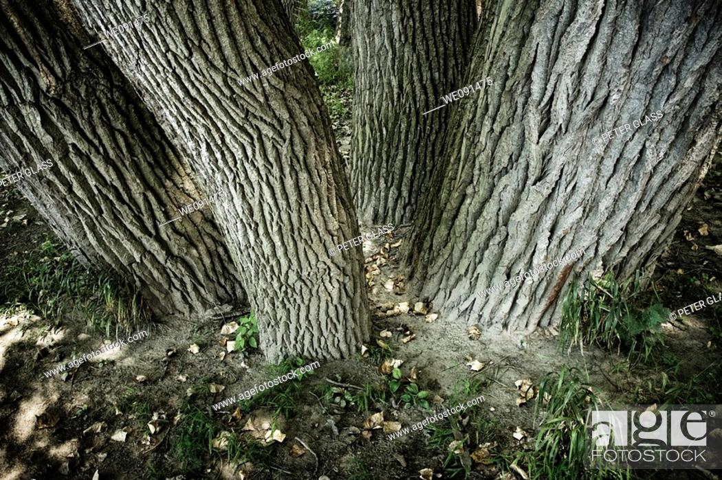 Stock Photo: Close-up of four trees in a park.