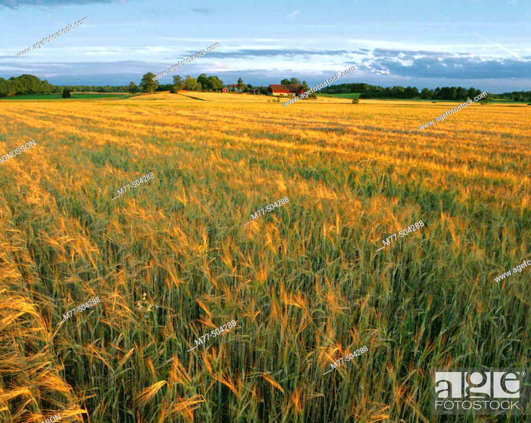 Stock Photo: Houses in the field, agricultural landscape. Hidinge. Närke. Sweden.