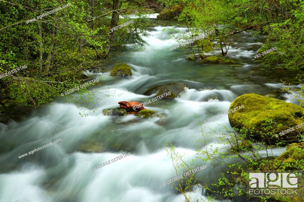 Stock Photo: Battle Axe Creek at Jawbone Flats, Opal Creek Scenic Recreation Area, Willamette National Forest, Oregon.
