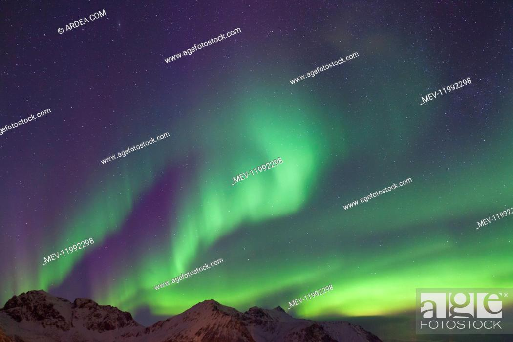 Stock Photo: Northern Lights - Aurora Borealis over the Lofoten - Norway.