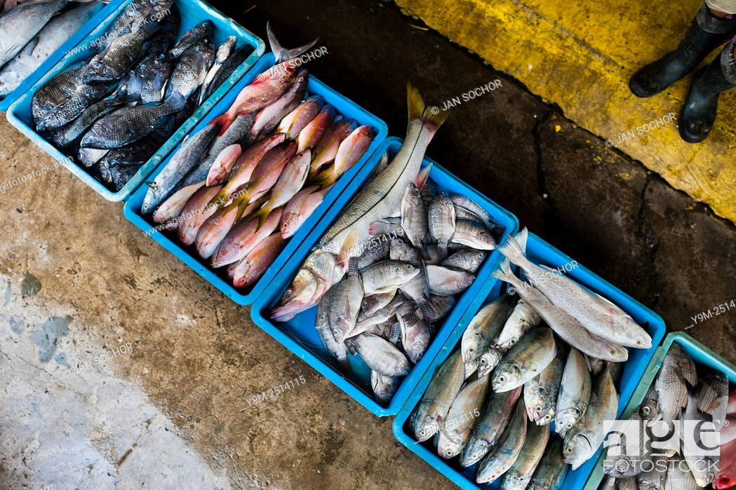 Stock Photo: Wide variety of fish red snappers, bluegills, ... is seen for sale at the seafood and fish market in Veracruz, Mexico.