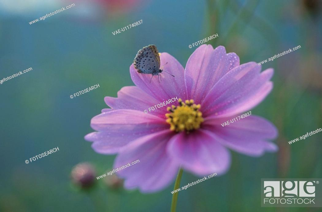 Stock Photo: A Butterfly Rest On A Flower.