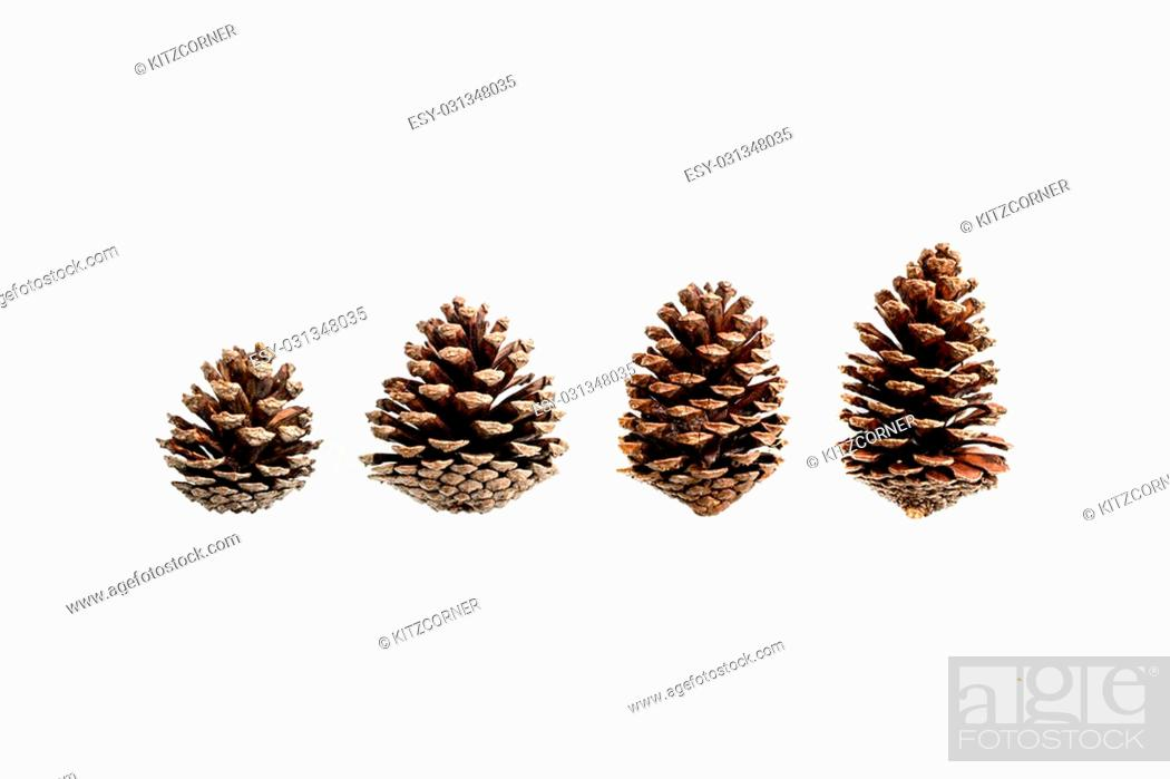 Stock Photo: set of various pine cone trees isolated on white background.