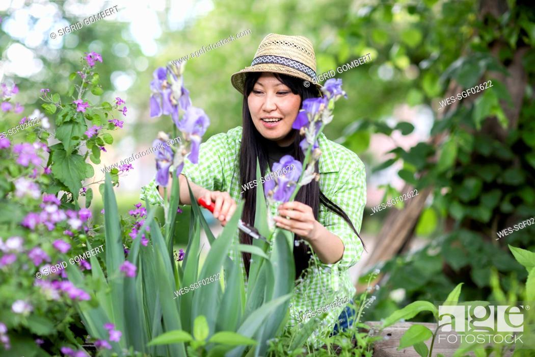 Stock Photo: Woman harvesting in urban garden.