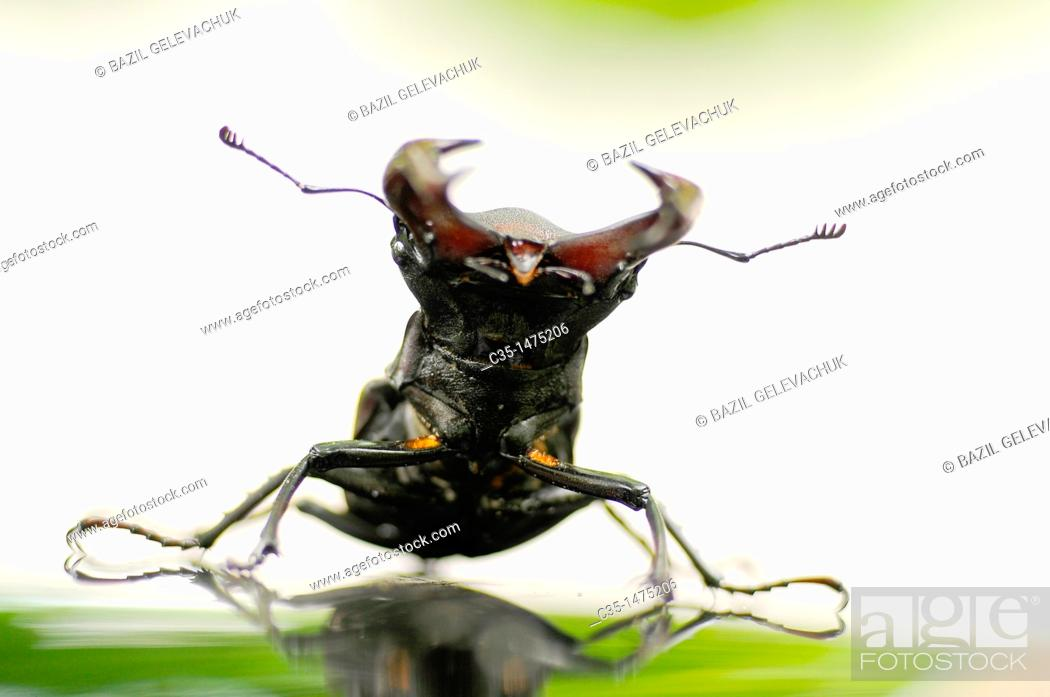 Stock Photo: Bug a deer.