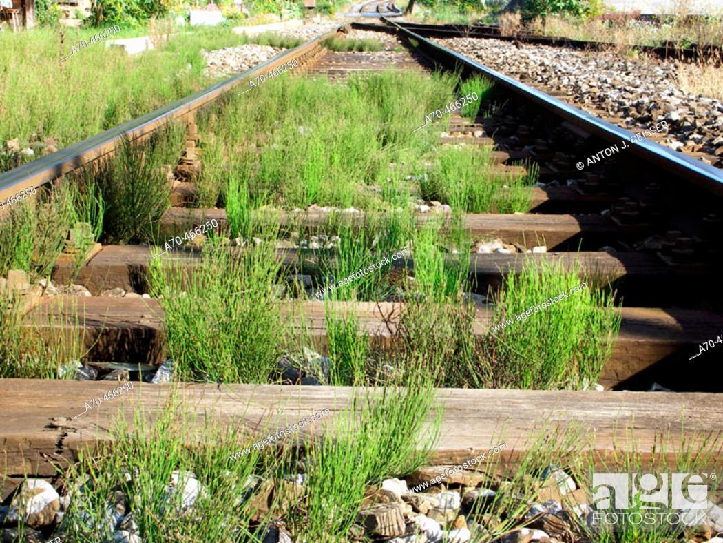 Stock Photo: Neglected railroad tracks.
