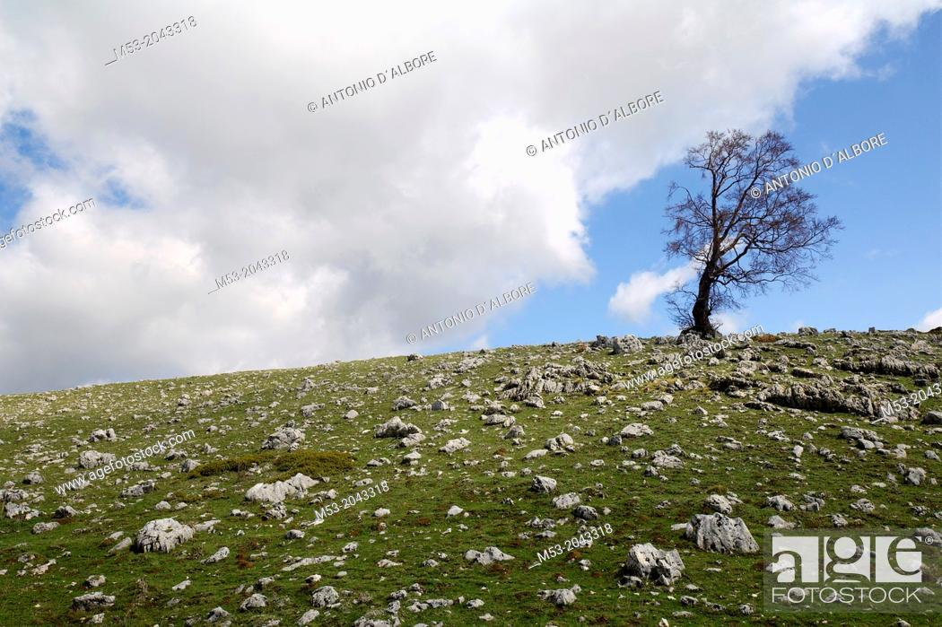 Stock Photo: an oak tree without leaves on the top of a rocky hill. Monte Godi. parco nazionale d'abruzzo. abruzzo. italy. europe.