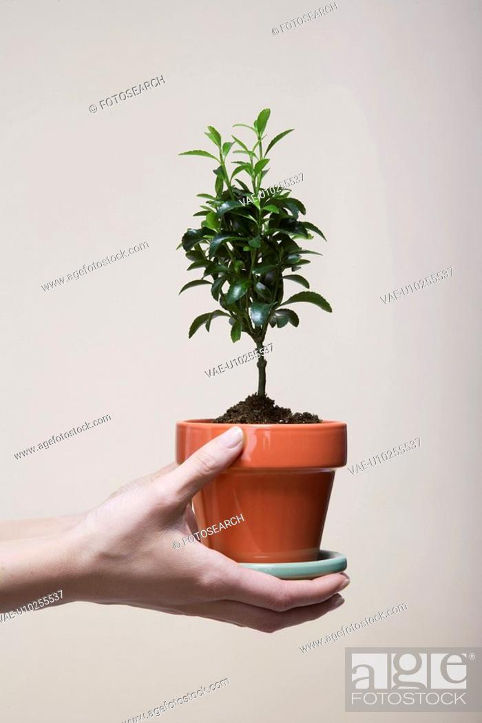 Stock Photo: Woman's hands holding potted plant close-up.