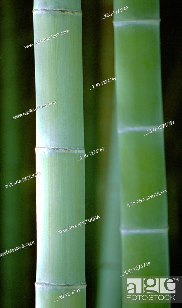 Stock Photo: Bamboo Arashiyama Japan.