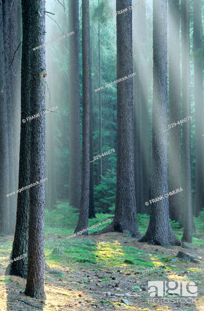 Stock Photo: Forest in Southern Bohemia, Czech Republic.