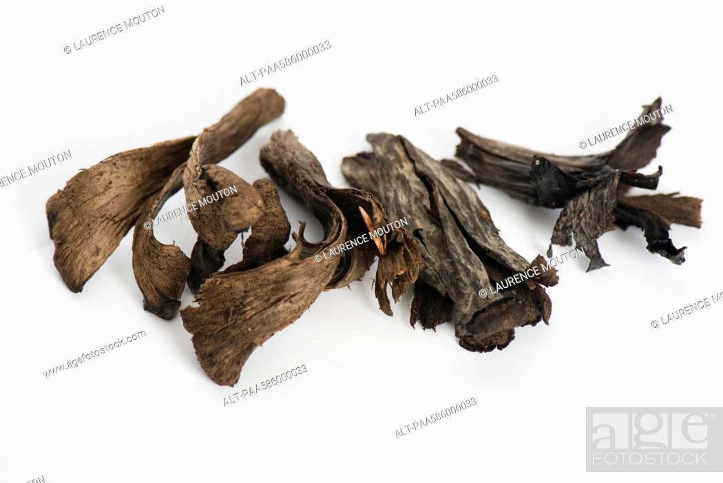 Stock Photo: Trumpet of death mushrooms Craterellus cornucopioides.