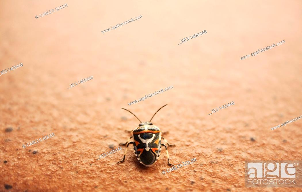 Stock Photo: Tribal mask insect.