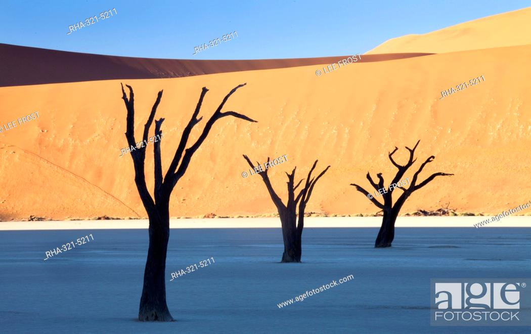 Stock Photo: Dead camelthorn trees said to be centuries old in silhouette against towering orange sand dunes bathed in morning light at Dead Vlei, Namib Desert.