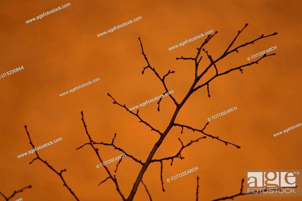 Stock Photo: feel, arrangement, design, decorative, character, appearance.