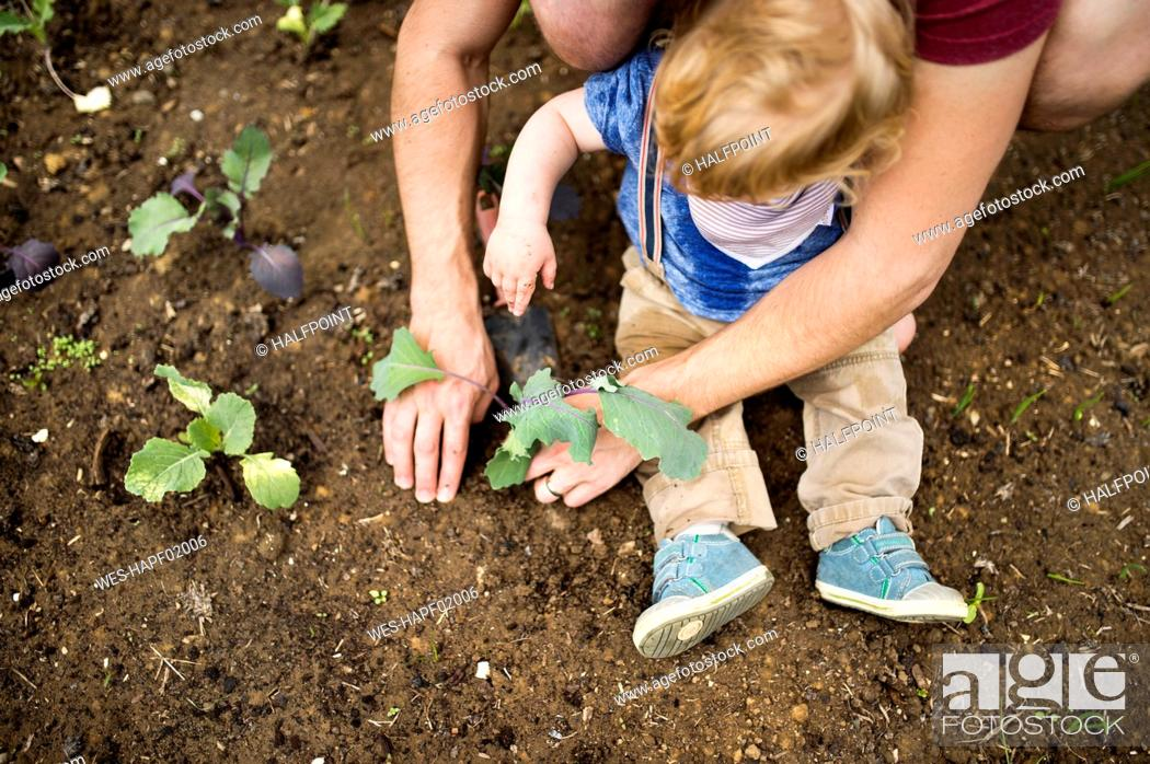 Imagen: Father with his little son in the garden planting seedlings.