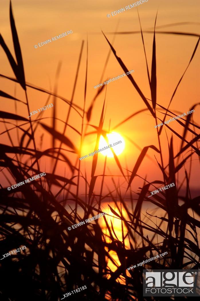 Stock Photo: Marsh Grasses at sunset, Chesapeake Bay.