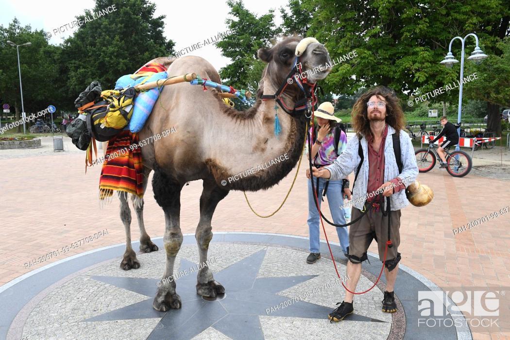 Stock Photo: 01 July 2020, Mecklenburg-Western Pomerania, Ueckermünde: Sebastien Arz and Alice Fiorzak are hiking with a camel through Ueckermünde.