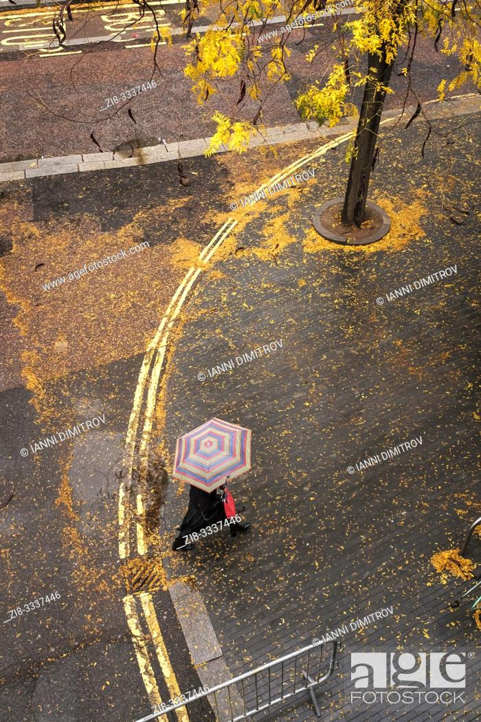 Stock Photo: England, London, Belvedere Road- october colours, Fallen leaves cover the wet pavement on a rainy day.
