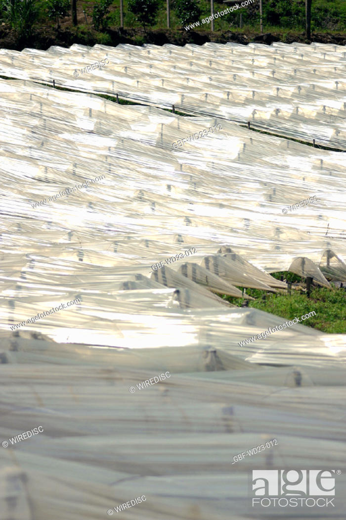 Stock Photo: Plasticulture, agriculture, Brazil.