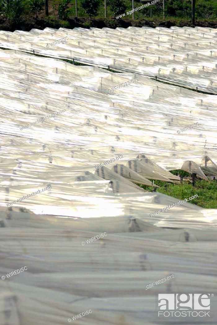 Stock Photo: Plasticulture, agriculture, Brazil.
