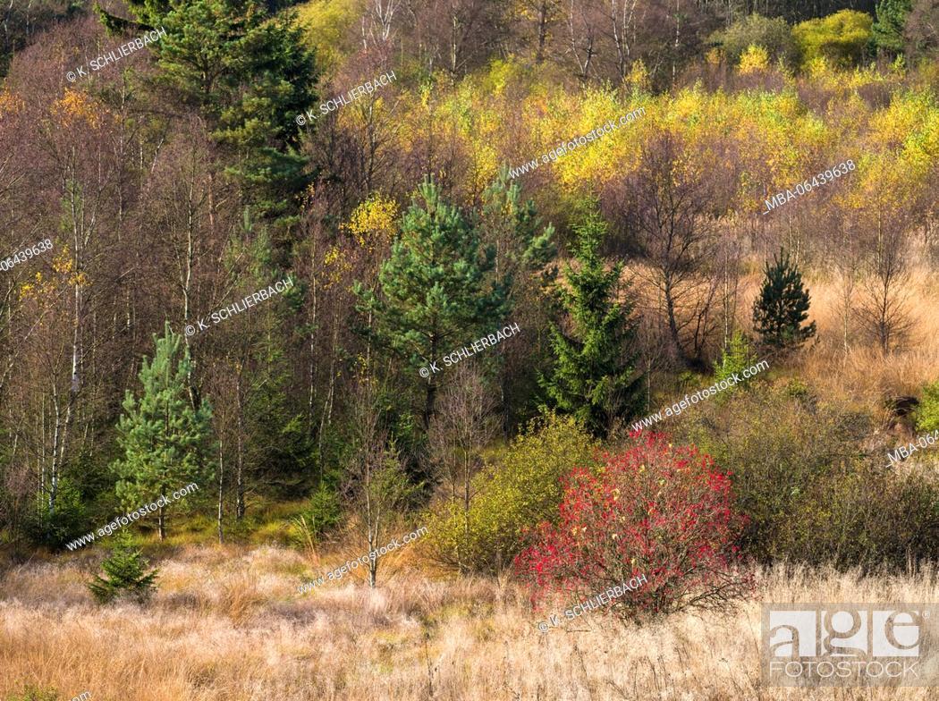 Imagen: Germany, Bavaria, Rhön Biosphere Reserve, UNESCO biosphere reserve, Naturschutzgebiet Schwarzes Moor (nature reserve), moor grasses.