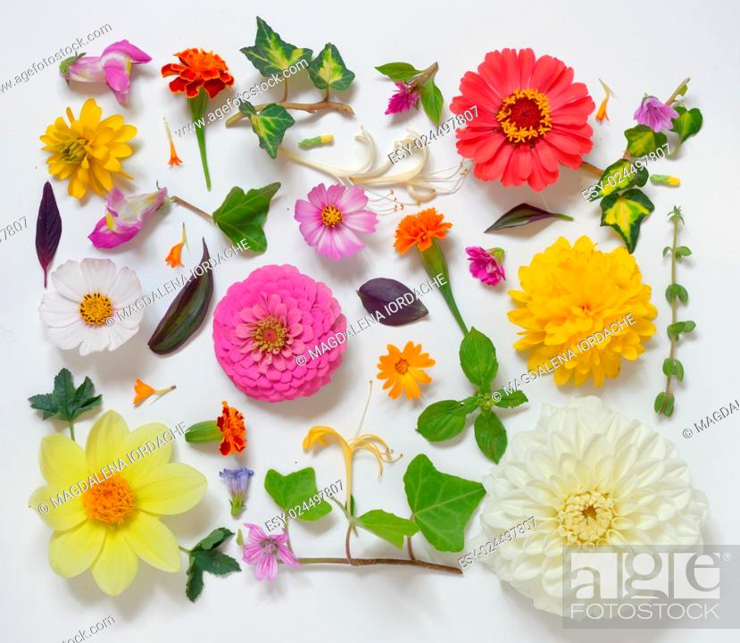 Stock Photo: Selection of Various Flowers Isolated on White Background.