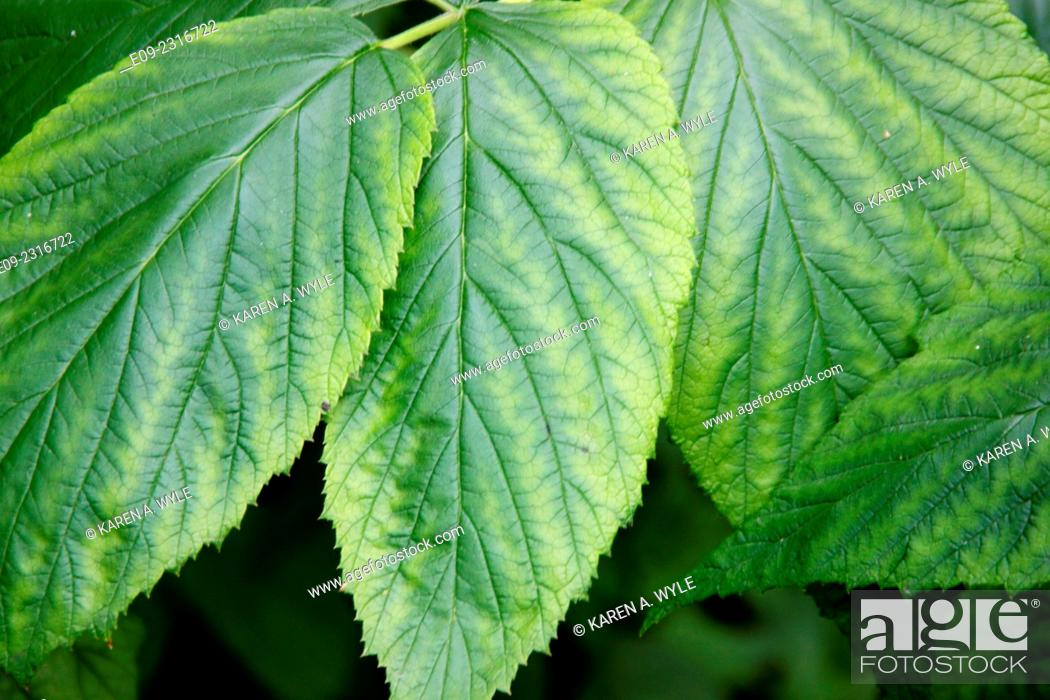 Stock Photo: closeup of leaves with different shades of green.