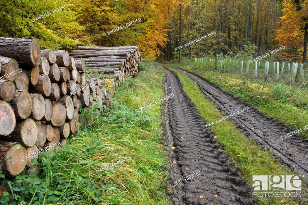 Stock Photo: Stacked tree trunks for timber industry, Germany, Europe.