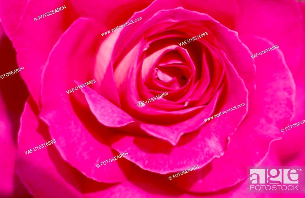 Stock Photo: scalet flowers, nature, flowers, flower, scene, wildflower, landscape.