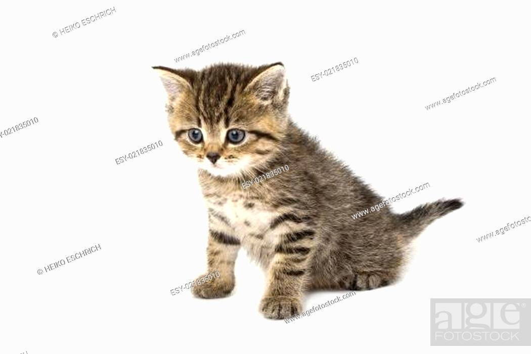 Stock Photo: kleiner Tiger.
