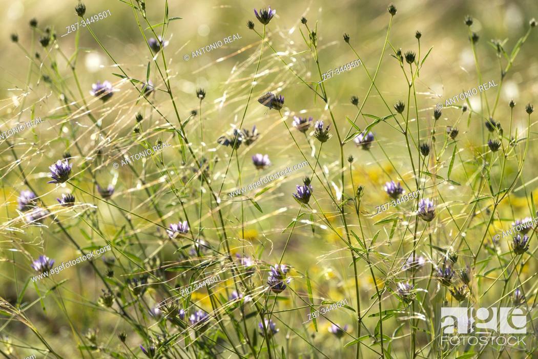 Imagen: Flowers. Almansa, Albacete Province, Spain.