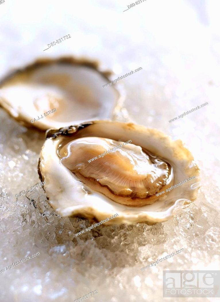 Stock Photo: Oyster.